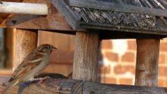 Sparrows in the bird feeder Stock Footage