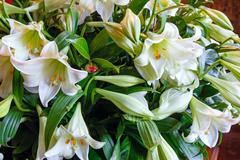 amaryllis flowers bouquet - stock photo
