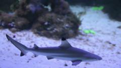 shark in an aquarium  underwater close up portrait - stock footage