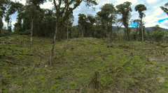 Montane rainforest destroyed for cattle ranching.  Stock Footage