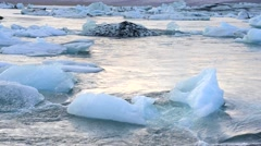 Floating icebergs - stock footage