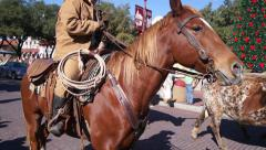 Longhorn Parade Stock Footage