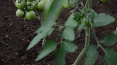 Tomato spudding two Stock Footage