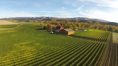 Vineyard Aerial View Stock Footage