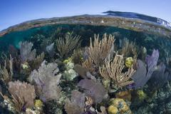 Diverse Caribbean Reef - stock photo