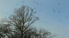 Birds on trees Stock Footage