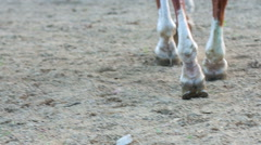 Horse walking on the sandy substrates - stock footage