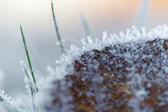Brown leaf with ice crystals Stock Photos