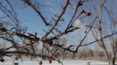 Snowy Tree Branch Stock Footage
