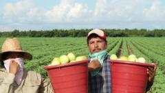 Couple of Mexican farm workers bring basket of tomatoes to camera, angry, tired Stock Footage