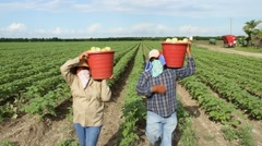 Couple of Latino farm workers bring basket of tomatoes to camera, angry Stock Footage