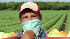 Smiling Latino farm worker smiles and shows tomatoes to camera Stock Footage