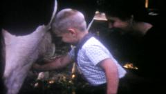 1559 - little boy learns how to milk a cow on the farm - vintage film home movie Arkistovideo