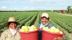 Migrant workers, man and woman show tomatoes, smile to camera in the field - stock footage