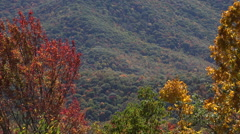 Stock Video Footage of zoom of fall colors on blue ridge parkway road, asheville, nc, usa