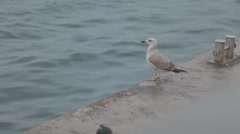 Gulls and pigeons on the promenade by the sea Stock Footage