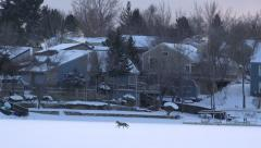 Coyote Running In Frozen Outdoor Stock Footage