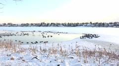 Birds In Frozen Hotspring Stock Footage
