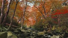 Beautiful Summer to Fall Color Trees Smoky Mountain Stream Stock Footage