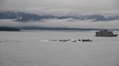 Whale watching in alaska 07, humpback whales feeding Stock Footage