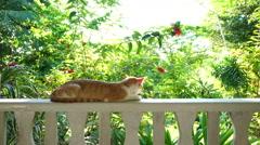 Cat relaxing in tropical garden Stock Footage