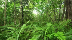 ferns in tropical forest - stock footage