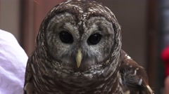 Close Up Of Barn Owls Face 4K Stock Footage