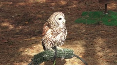 Barn Owl Sitting On Perch 4K Stock Footage