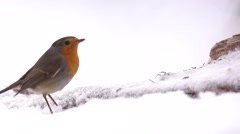 Robin slow motion Stock Footage