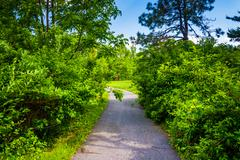 bushes along a path at cylburn arboretum in baltimore, maryland. - stock photo