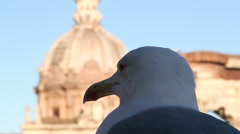 Seagull visiting rome pan Stock Footage