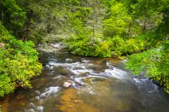 little river, in dupont state forest, north carolina. - stock photo
