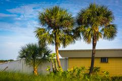 palm trees and a building in st. augustine beach, florida. - stock photo