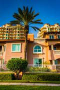 Palm trees, houses and condo towers in saint petersburg, florida. Stock Photos