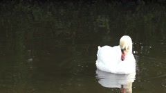 Swan and ducks on the Trent and Mersey Canal.mp4 Stock Footage