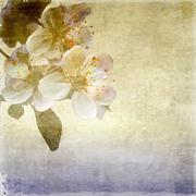 Vintage apple tree flowers on grunge background - stock illustration