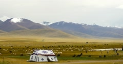 4k Tibet herdsman tent on xizang Plateau,cow & sheep flock. Stock Footage