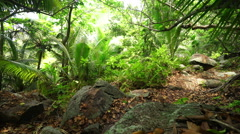 walking on path in tropical forest - stock footage