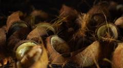 Closeup coconut halfs drying Stock Footage