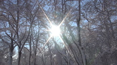 HD. Winter landscape with sun shining through the trees branches. Snow season. Stock Footage