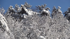 HD. Beautiful landscape with snow over the mountain forest. Winter holiday view. - stock footage