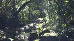 Small Streams in Hawaii Jungle at Haleakala National Park - stock footage