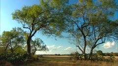 Texas Ranch Trees Pan - stock footage