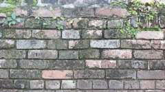 background of moss on centuries old brick wall - stock footage