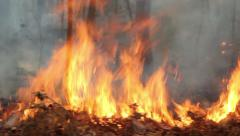 Wildfire in mountain of thailand(pan shot) Stock Footage