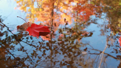 Red fallen maple leaf in water with reflections of autumn forest Stock Footage