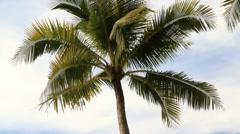 Coconut palm tree on the sea beach Stock Footage