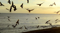 Flock of Sea Gulls Fly Together at Sunset Stock Footage