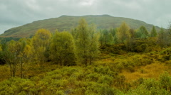 Natural Landscape in Scotland, lush with growth Stock Footage