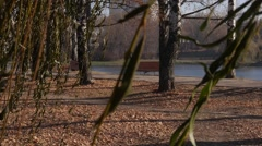 Willow tree leafs in fall park Stock Footage